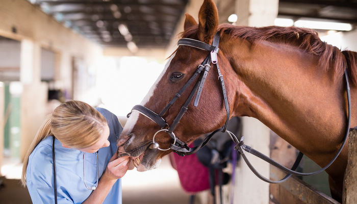Becoming a Veterinary Technician: Everything you need to know about this career