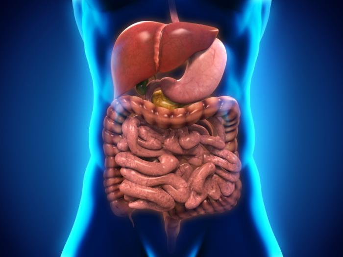 10 Interesting Facts About Your Digestive System