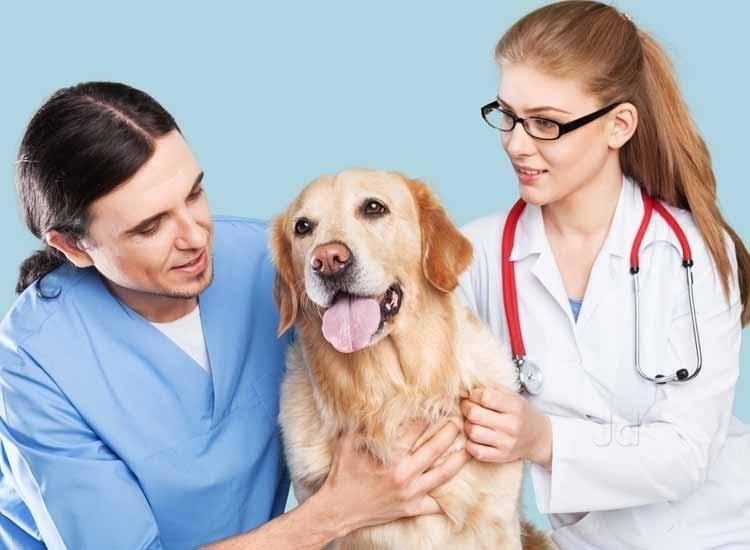 What do veterinary degrees cover?